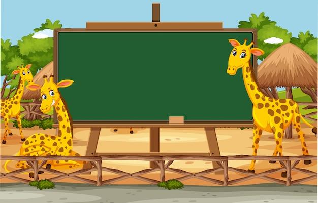 Modèle de tableau noir avec des girafes heureux dans le zoo
