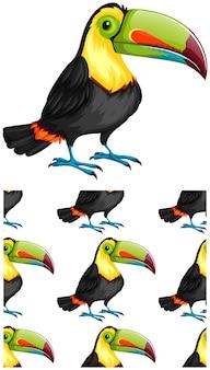 Modèle toucan sans couture isolé sur blanc
