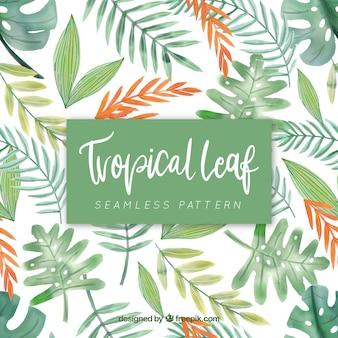 Modèle tropical avec des feuilles