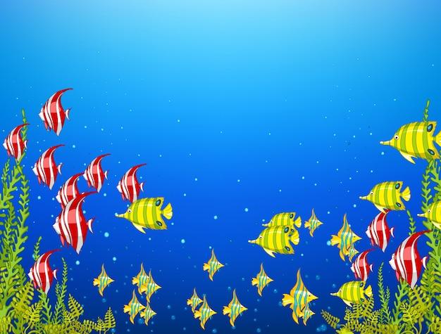 Monde sous-marin d'océan