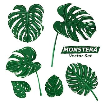 Monstera feuilles plante illustration dessin collection de jeu. vecteur de plante d'été tropical.