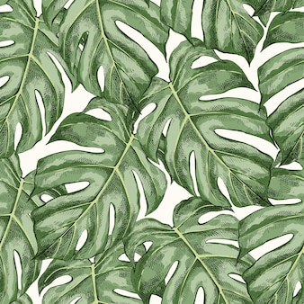 Monstera laisse motif de couleur transparente dessinée à la main