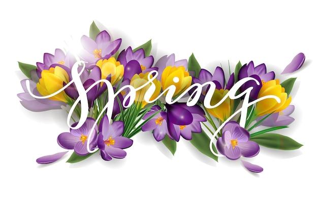 Mot de printemps avec des crocus de fleurs. concept de fond de printemps. modèle vectoriel