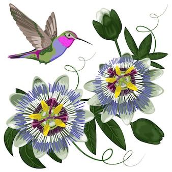 Motif colibri et passiflore pour cartes postales, cartes de voeux, imprimés textiles et t-shirts