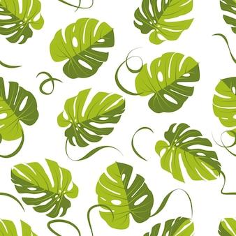 Motif de feuille de monstera, fond transparent de feuille de palmier. illustration vectorielle