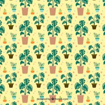 Motif feuilles monstera plat