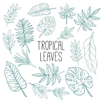 Motif de feuilles tropicales lineart