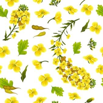 Motif fleurs de colza, canola. brassica napus.