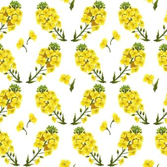 Motif fleurs de colza, canola. brassica napus