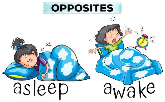 Des mots opposés pour une illustration endormi et éveillée