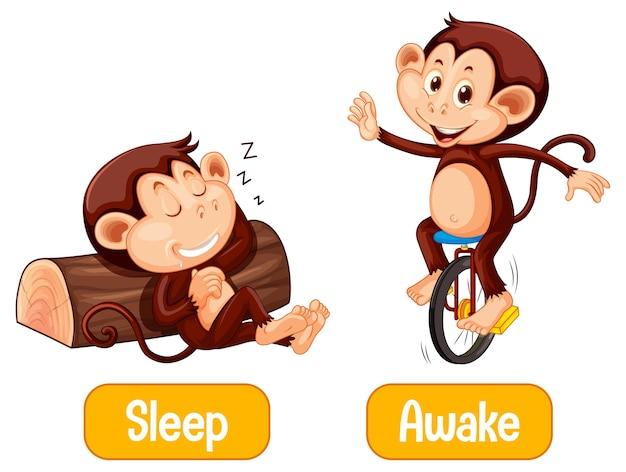 Mots opposés avec sommeil et éveillé