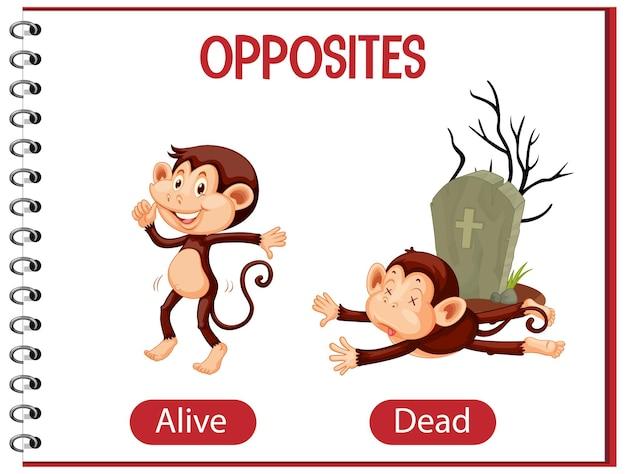 Mots opposés avec vivants et morts