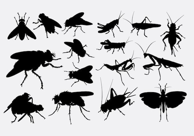 Mouche cricket et silhouette de sauterelle
