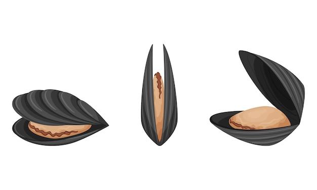 Moules crues avec style plat de coquilles