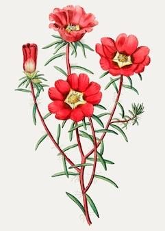 Mousse de rose