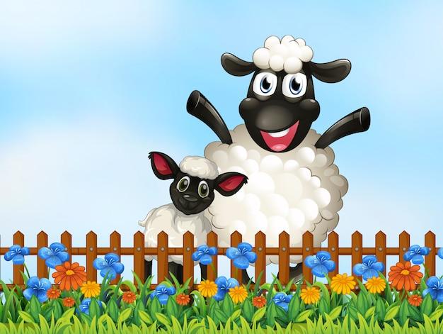 Mouton dans le jardin