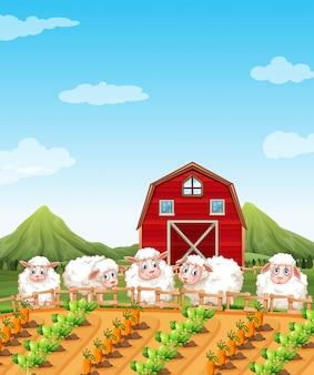 Mouton dans les terres agricoles