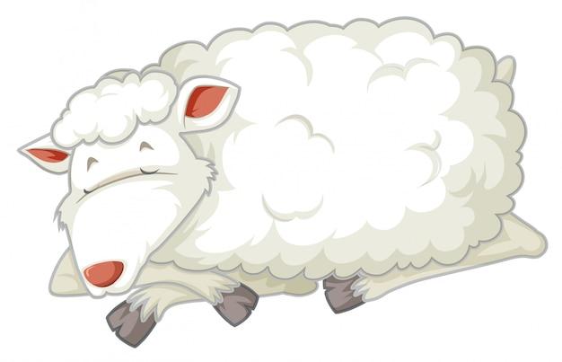 Un mouton isolé qui dort
