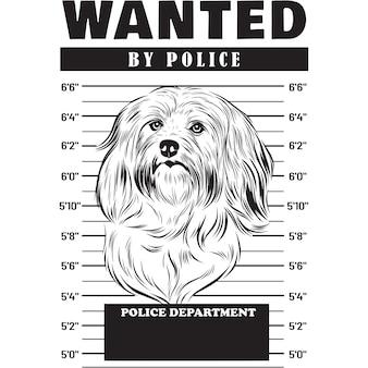 Mugshot de chien bichon havanais tenant une bannière derrière les barreaux