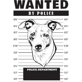 Mugshot de chien lévrier italien tenant une bannière derrière les barreaux