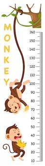 Mur mètre avec le singe. illustration.