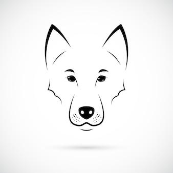 Museau de loup sur fond blanc