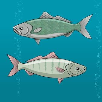 Naseux commun. illustration vectorielle