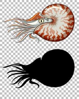 Nautilus chambré avec sa silhouette sur transparent