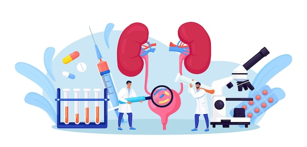 Néphrologie, urologie. infection des voies urinaires, uti medical concept. deux médecins vérifient et traitent la vessie et les reins. endoscopie rénale, examen, néphrectomie partielle