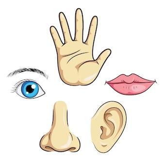 Nez, oeil, oreilles, lèvres, main