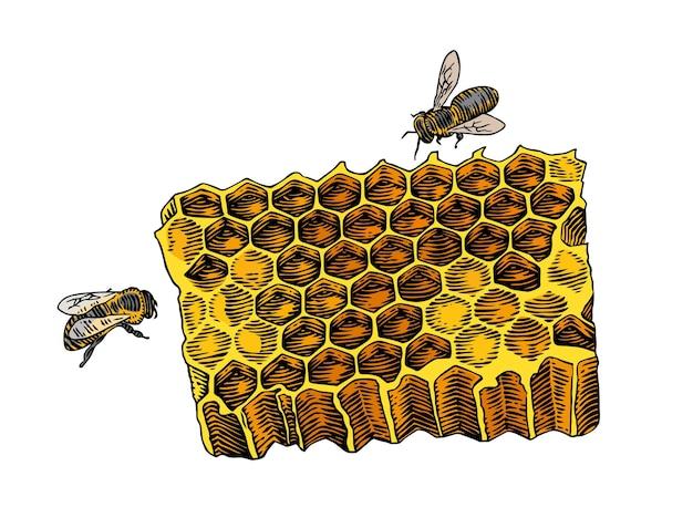 Nid d'abeilles isolé et deux abeilles sur le blanc