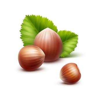 Noisettes réalistes non pelées avec des feuilles close up isolé sur blanc