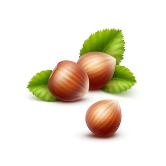 Noisettes réalistes non pelées avec des feuilles close up isolé sur fond blanc