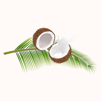 Noix de coco cassée réaliste en pulvérisant du lait de coco