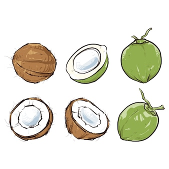 Noix de coco isolée