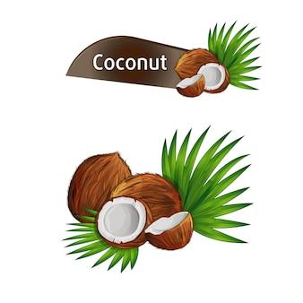 Noix de coco avec moitié et feuilles de palmier vert