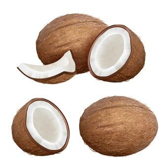 Noix de coco réaliste. gros plan nature tropicale fruits frais de palme fraîche noix de coco photos