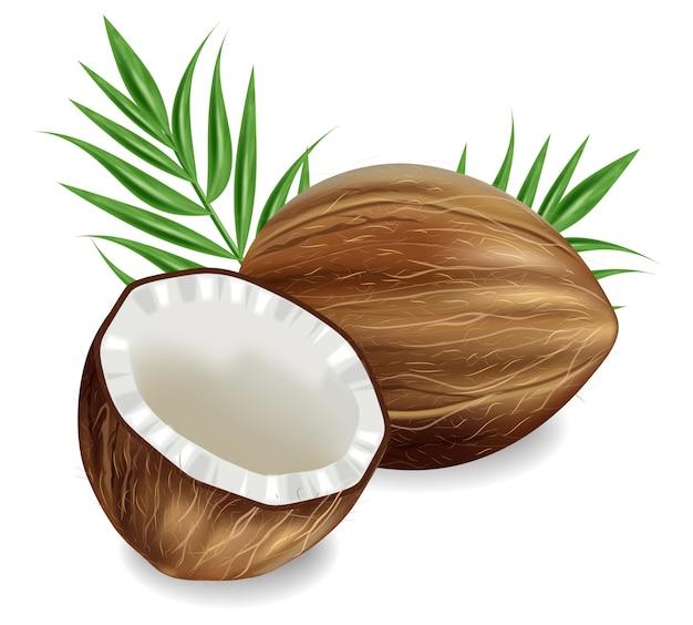 Noix de coco réalistes isolés