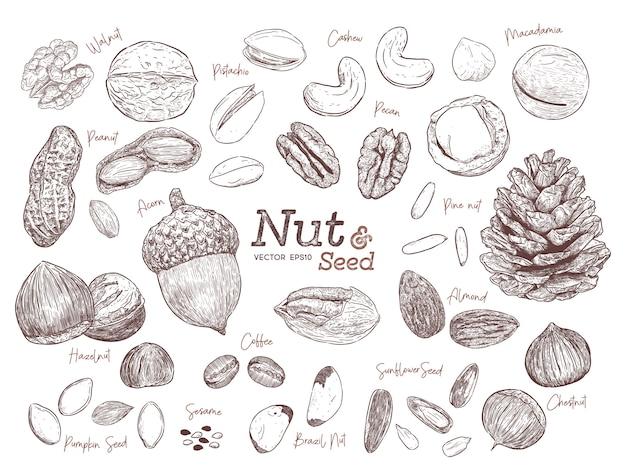 Noix et graines collection main dessiner vecteur de croquis.