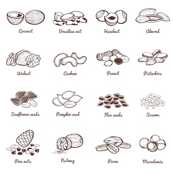 Noix et graines comestibles vector icons. protéine ensemble d'aliments sains