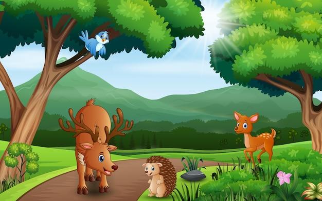 De nombreux animaux s'amusant dans la jungle