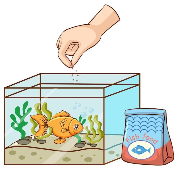 Nourrir les poissons rouges à la main dans le réservoir