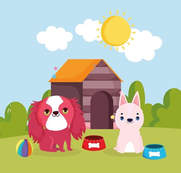 Nourriture et maison pour animaux de compagnie