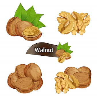 Noyau de noix en bref avec jeu de feuilles