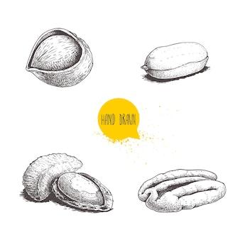 Noyaux et avec des coquilles de noix