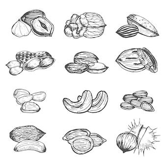 Nuts set croquis de dessin à la main. style vintage.