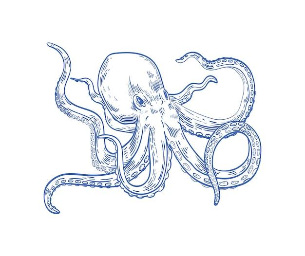 Octopus ou kraken dessiné avec des lignes de contour