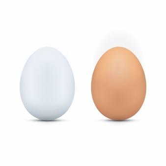 Œufs blancs et bruns