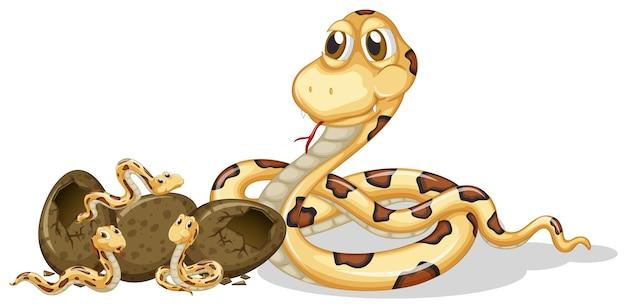 Oeufs à couver des serpents à sonnettes