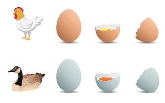 Œufs de canard et œufs de poulet